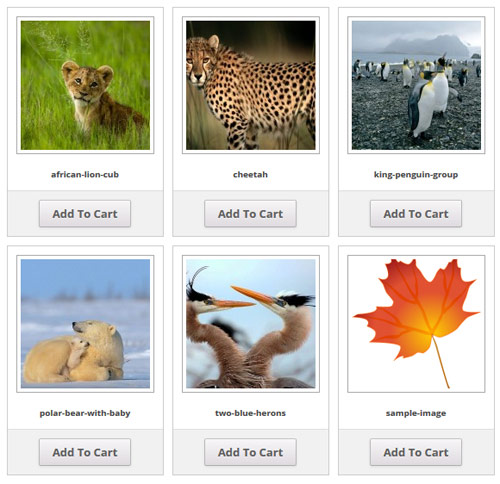 photo-seller-gallery-template-3-example