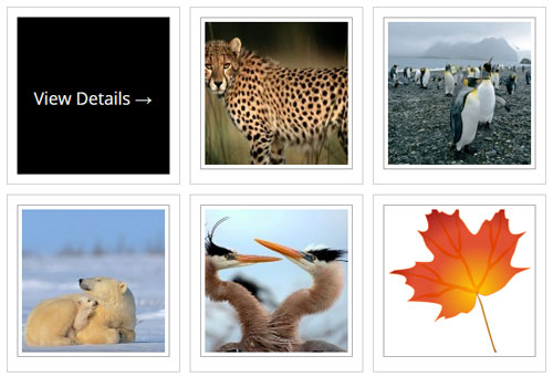 photo-seller-gallery-template-6-example