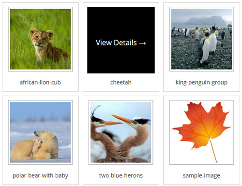 photo-seller-gallery-template-8-example